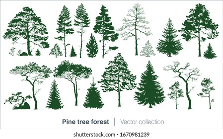 Vector collection with fir trees and coniferous forest isolated on white background