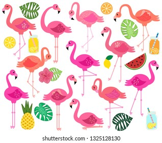 Vector Collection of Flamingos and Tropical Leaves. Fruit and Summery Drinks