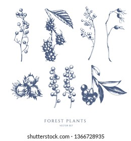 Vector collection of forest nuts and berries. Bramble, blueberry, hazelnut. Hand drawn sketch.