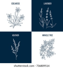 Vector collection of four hand drawn medicinal plants, edelweiss, lavender, heather, miracle, tree