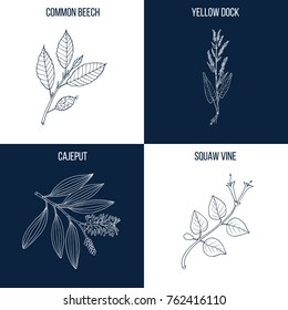 Vector collection of four hand drawn medicinal and eatable plants, beech, yellow dock, cajeput