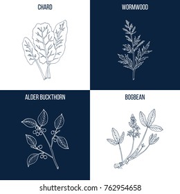 Vector collection of four hand drawn medicinal and eatable plants, chard, wormwood, alder buckthorn, bogbean