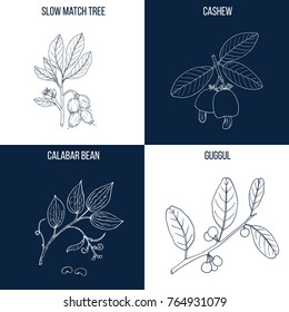Vector collection of four hand drawn medicinal and eatable plants, slow match tree, cashew, calabar bean, guggul