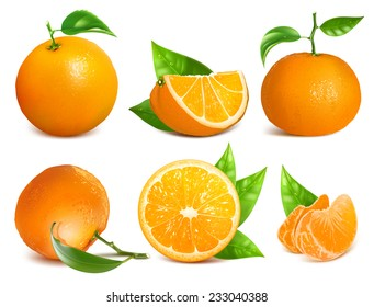 Vector collection of fresh ripe oranges and tangerines with leaves.