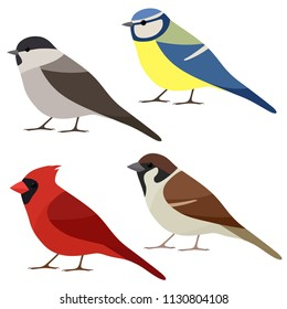 Vector collection of garden bird. Sparrow, Northern cardinal, Blue tit, Marsh tit isolated on white background. Colorful bird set in flat style