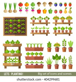Vector collection of garden and orchard. Plants in pots and beds, vegetables and fruits. Gardening, spring seedlings, cultivation of vegetables.