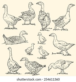 Vector collection of goose / Geese. Line drawing