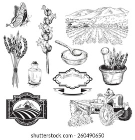 Vector collection of graphic lavender flowers sketch
