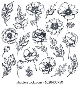 Vector collection of hand drawn anemone flowers, buds and leaves in sketch style isolated on white background. Beautiful floral elements for spring design or coloring book.