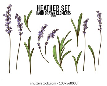 Vector collection of hand drawn colored  heather