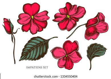 Vector collection of hand drawn colored  impatiens