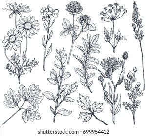 Vector collection of hand drawn flowers and herbs isolate on white background