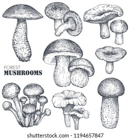 Vector collection of hand drawn forest mushrooms. Isolated sketch objects, food drawing. Porcini, boletus, honey agaric, chanterelle, russula. Vegetarian product for menu, market, packaging