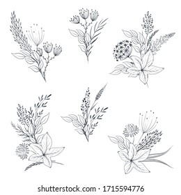 Vector collection of hand drawn herbs and wildflowers. Romantic summer floral set