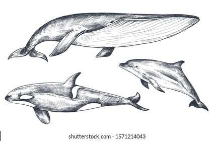 Vector collection of hand drawn ocean and sea animals in sketch style isolated on white. Whale, dolphin, orca. Monochrome graphic set.