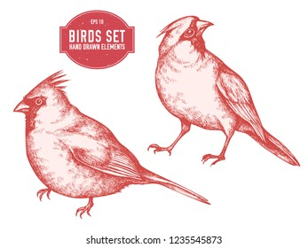 Vector collection of hand drawn pastel cardinal