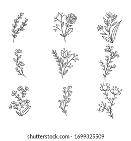 Vector collection of hand drawn plants.