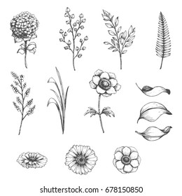 Vector collection of hand drawn plants. Botanical set of sketch flowers,  branches and leaves.