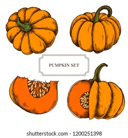 Vector collection of hand drawn pumkins highly detailed