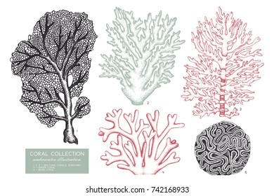Vector collection of hand drawn reef corals sketch.Vintage set underwater natural elements. Vintage sealife illustration on white background