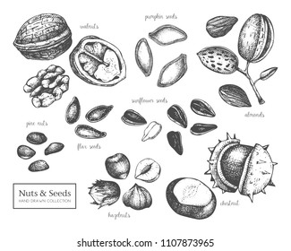 Vector collection of hand drawn seeds and nuts sketches. Walnut, hazelnut, almond, chestnut, pine nut, sunflower, pumpkin, flax seeds drawings. Healthy food elements collection.