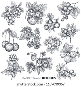 Vector collection of hand drawn sketched berries isolated on white background. Strawberry, cherry, raspberry, gooseberry, blackberry, cloudberry, cranberry, blueberry