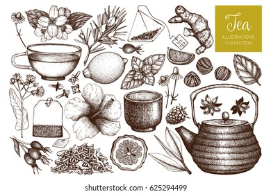 Vector collection of hand drawn tea illustration. Decorative inking herbs and fruits sketch. Vintage matcha  design.