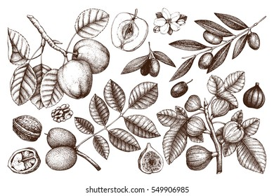 Vector collection of hand drawn trees illustration. Vintage set of leaves, fruits, seeds, nuts, flowers sketch white background. Botanical garden drawing.