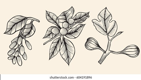 Vector collection of hand drawn trees illustration. Vintage set of leaves, fruits, seeds, nuts, flowers sketch beige background. Botanical garden drawing.