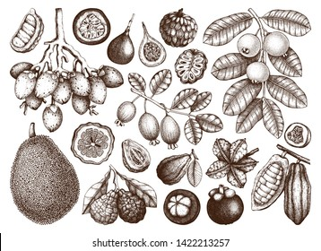 Vector collection of hand drawn tropical fruits illustration. Vintage set of leaves, fruits, flowers, nuts, beans sketches on white background. Exotic plants drawings. Botanical outlines.