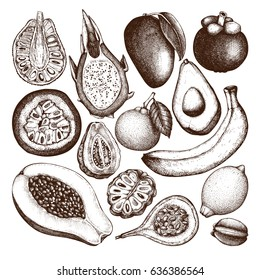 Vector collection of hand drawn Tropical fruits illustration. Engraved botanical sketch set. Vintage exotic plants drawings.