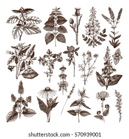 Vector Collection of hand drawn Weeds and Herbs. Botanical  illustration. Vintage Medicinal and Poisonous Plants sketch set - Part 1