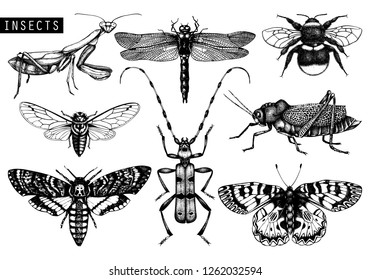Vector collection of high detailed insects sketches. Hand drawn butterflies, beetles, dragonfly, cicada, bumblebee, grasshopper, mantis illustrations on white background. Vintage entomological drawing