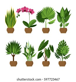 Vector collection of indoor, house plants in pots. Home decorative and deciduous plants in a flat style. Set of elements for design house, room or office. Isolated  elements on white background.
