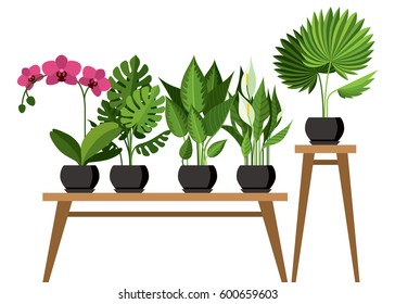 Vector collection of indoor, house plants in pots. Home decorative and deciduous plants in a flat style. Isolated elements on white background.