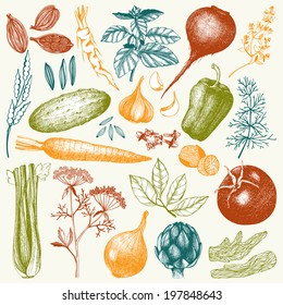 Vector collection of ink hand drawn vegetables, herbs and spices. Vintage healthy food illustration. Colored food drawings