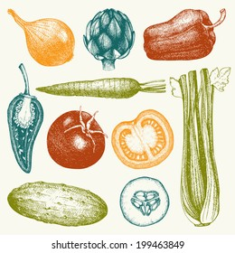 Vector collection of  ink hand drawn vegetables. Vintage healthy food illustration. Decorative colorful vegetables.