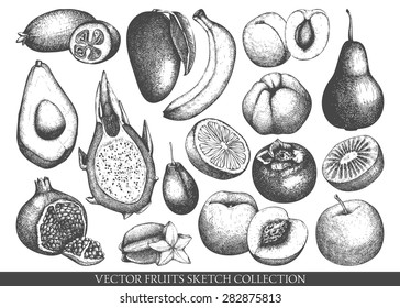 Vector collection of ink hand drawn exotic and garden fruits sketch for kitchen and restaurant design. Vintage  fruit illustration for vegetarian food.