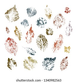 Vector collection of ink printing leaves isolates on white background. Forest design elements. Perfect for seasonal advertisement, invitations, cards, backgrounds. For eco goods wrapping.