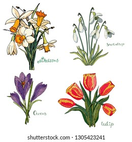 Vector collection isolated spring bouquets on white. Various elements for spring season floral design. Bouquets of tulips, snowdrops, crocuses and daffodils (daffodils)