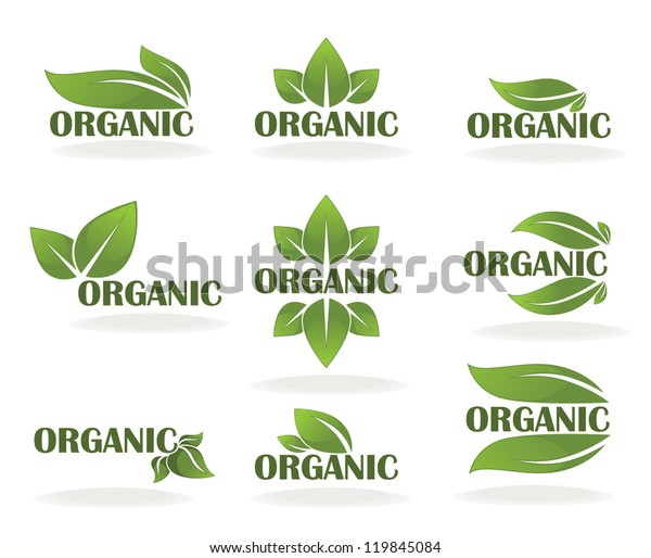 Vector Collection Leaf Signs Symbols Organic Stock Vector