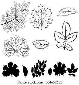 Vector collection of leaf silhouettes. Black shapes of leaves isolated on a white background