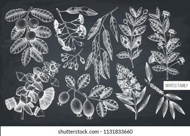 tea tree essential oil Stock Vectors, Images & Vector Art