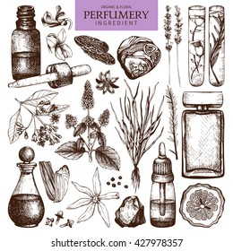 Vector collection of perfumes and cosmetics ingredients sketch. Vintage set of hand drawn herbs and plants illustrations. Aromatic materials for Perfumery.