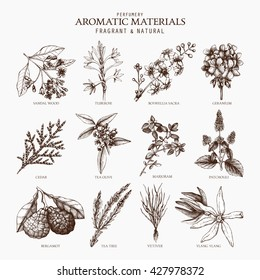 Vector collection of perfumes and cosmetics ingredients sketch. Vintage set of exotic plants illustration for perfumery. Aromatic materials. Exotic flowers set.