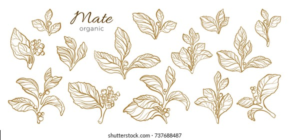 Vector collection of realistic branches. Nature set of mate with leaves, flowers and berries. Art line sketch on white background. Botanical drawing. Organic food Eps.10