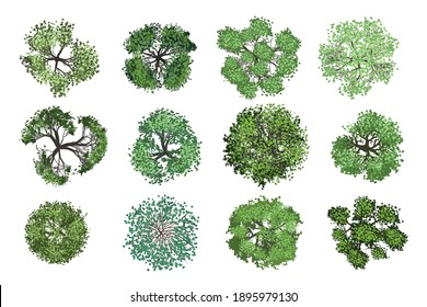 Vector collection. Realistic trees. Top view. Different plants and trees vector set for architectural or landscape design. (View from above) Nature green spaces.