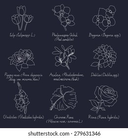 vector collection set of hand drawn flowers