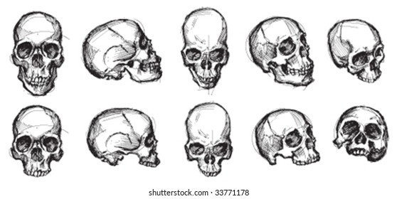 Vector - A collection of skulls. No white fills are used. Skulls are on a transparent background so that they can be applied to any color background.
