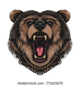 Vector Color Bear Head Illustration